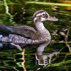 eine fröhliche Ente zum Spiegeltag