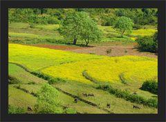Eine fruchtbare Landschaft