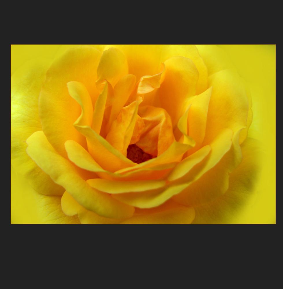 eine gelbe