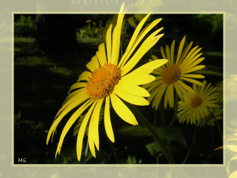 Eine gelbe Schönheit...