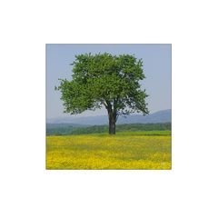 Eine Grün-Gelbe Koalition ...