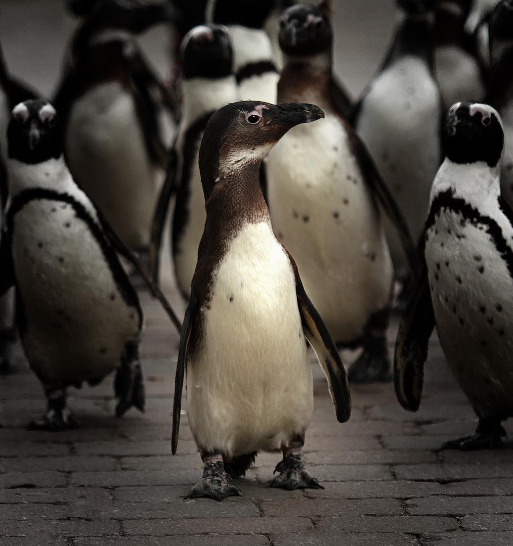 Eine Gruppe Pinguine