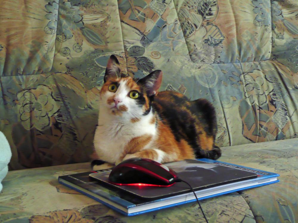 Eine gute Katze bewacht ihre Beute