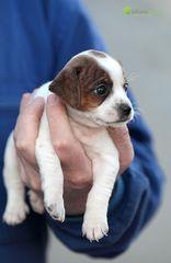 Eine Hand voll Hund :-)
