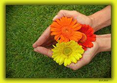 """""""Eine Hand voller Blumen"""""""