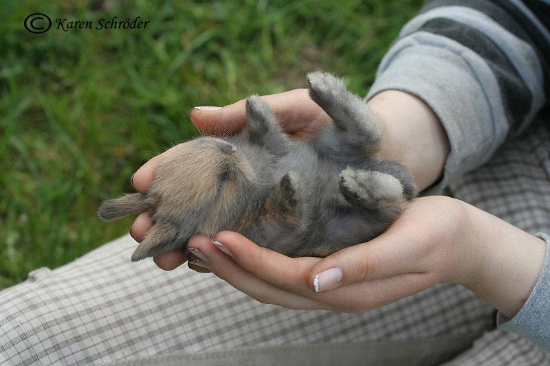 Eine Handvoll Hase
