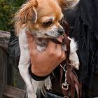 Eine handvoll Hund!