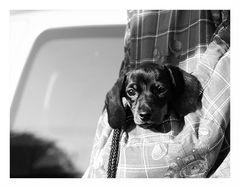 Eine Handvoll Hund...
