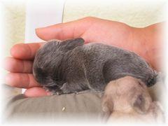eine Handvoll Kaninchen
