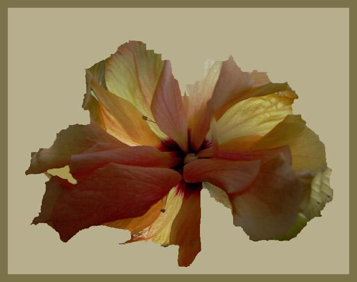 Eine Hibiskusblüte