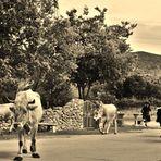 Eine Hirtin und Ihre Herde