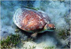 Eine hübsche Schildkröte