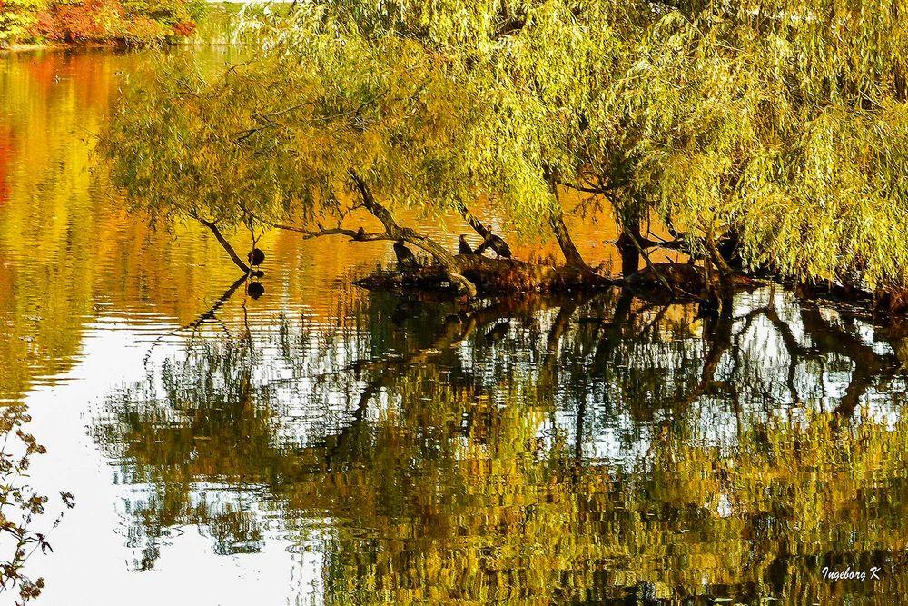 Eine Insel im Teich - Jrönes Meerken Neuss