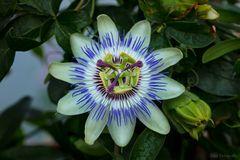 Eine interessante Blüte