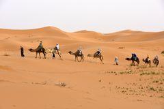 Eine Kamelkarawane in der Erg Chebbi in Marokko
