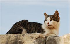 Eine Katze aus Ephesos