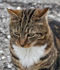Eine Katze, die nachdenkt! Was kommt wohl dabei heraus? - Un chat philosophe!