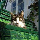 Eine Katze die sich sonnt