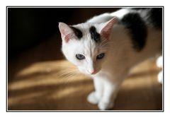 ..... eine Katze für die Galerie