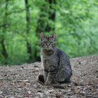 Eine Katze im Naturpark
