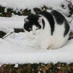 Eine Katze im Winter, hat sie kalt?