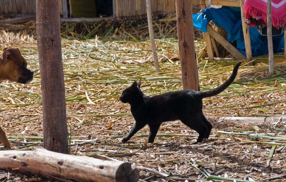 Eine Katze und ein Hund auf dem Titicaca-See