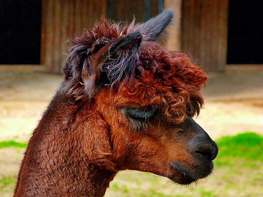 Eine kesse Frisur . . . .