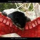 Eine kleine Bärengeschichte in Fünf Teilen... (3)