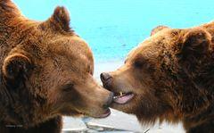 Eine kleine Bärenserie