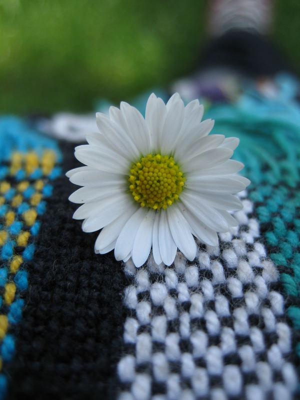 eine kleine Blume......