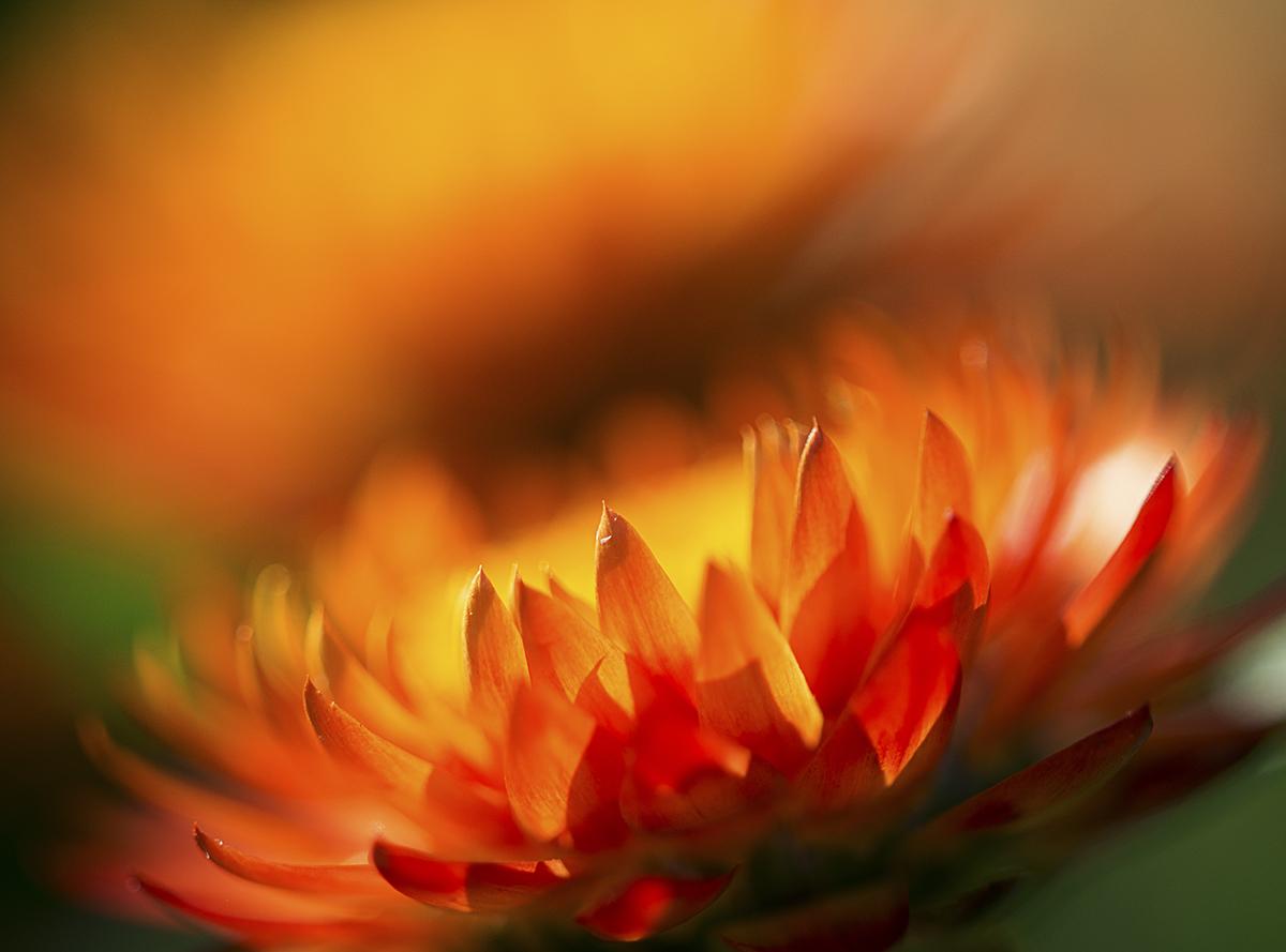 eine kleine Blume, deren Namen ich nicht weiß :-)