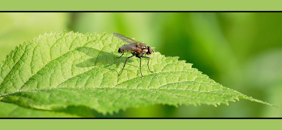 Eine kleine Mücke
