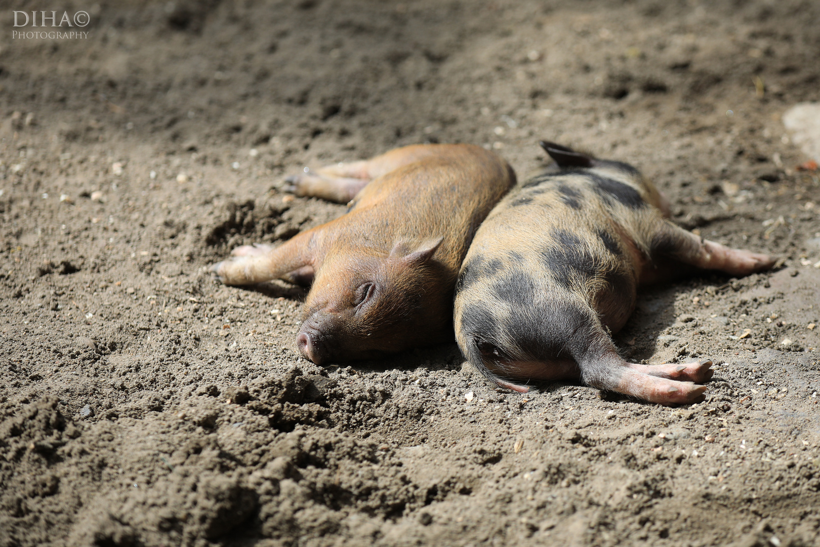 eine kleine Schweinerei....