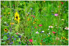 Eine kleine Sommerwiese...