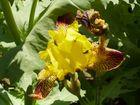 eine kleine Sonne im Blumenbeet