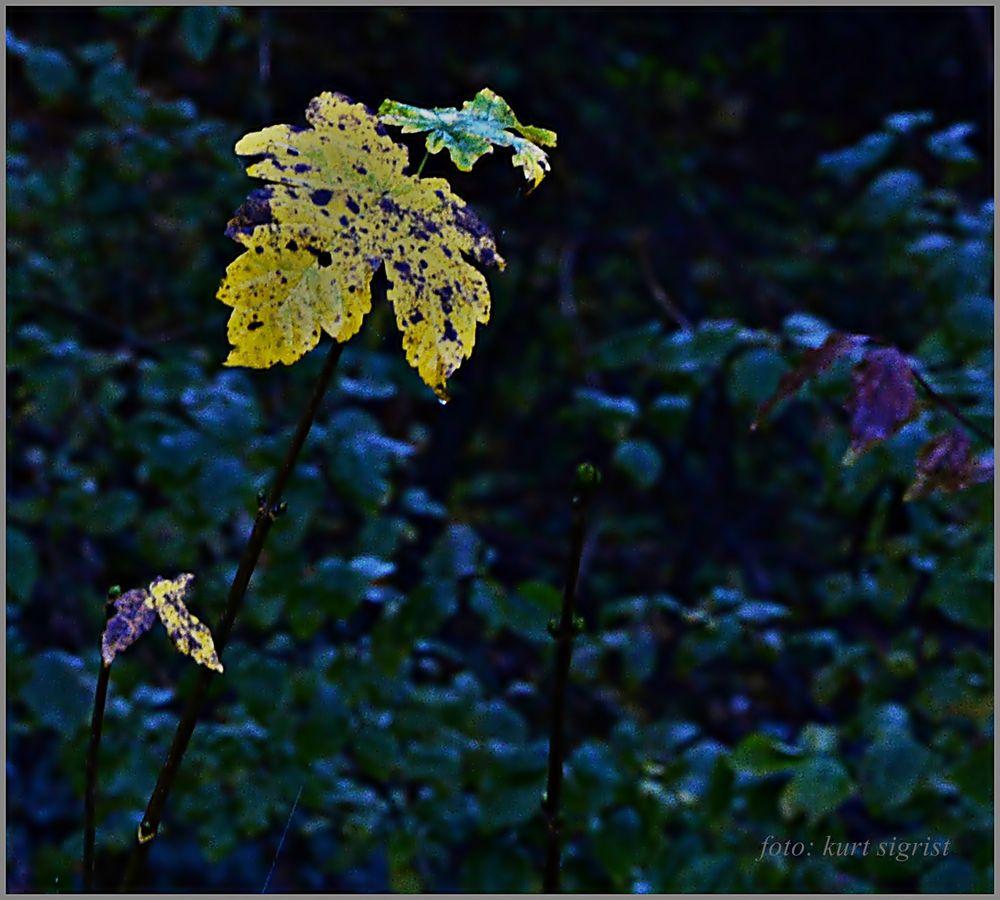 Eine kleine Träne zum Abschied Foto & Bild | natur-kreativ