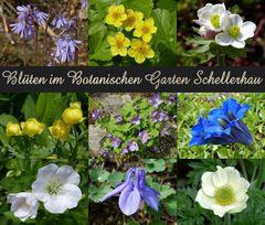 Eine kleinen Blütengruß aus dem Botanischen Garten Schellerhau
