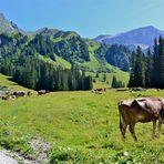 Eine Kuh macht Muh, …