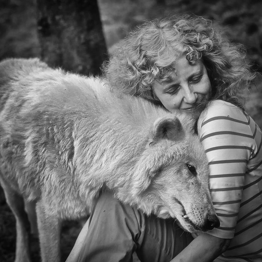Eine Lanze für den Wolf