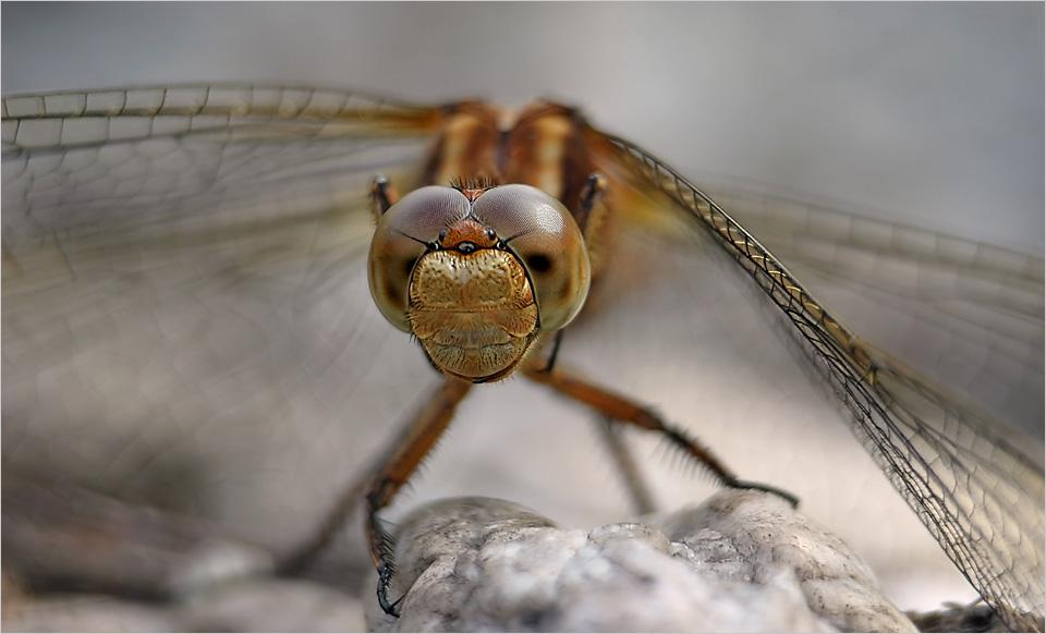 Eine Libelle...