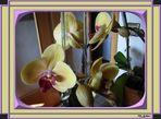 Eine meiner Orchideen