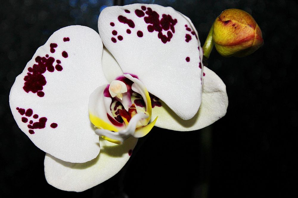 eine meiner Orchideen...