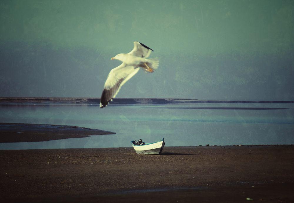 Eine Möwe die durch's Bild fliegt