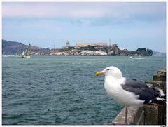 Eine Möwe vor Alcatraz..