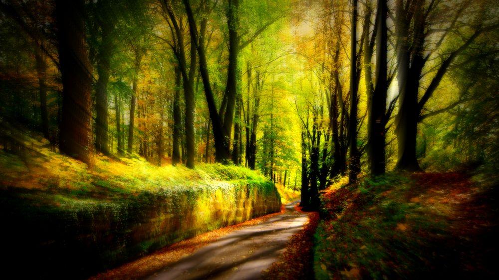 Eine Natur Oase rund um Kronach,der Festungswald