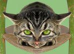 Eine neue Katzenrasse