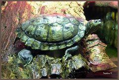 eine neugierige Schildkröte