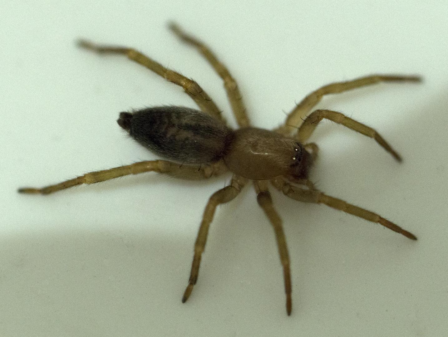 eine niedliche Spinne ;-)