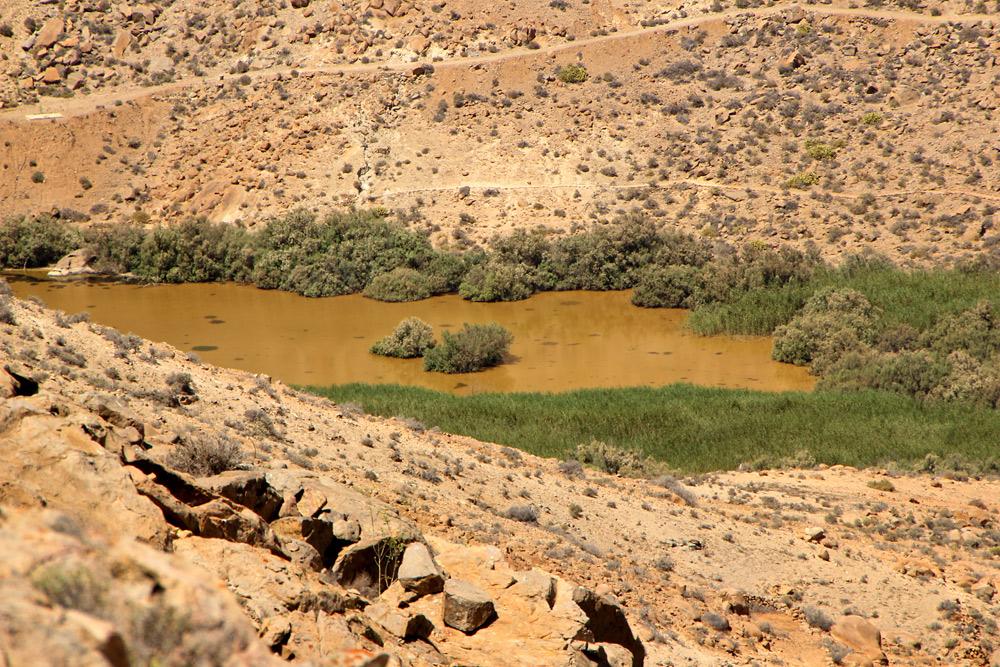 eine Oase in der Wüste
