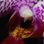 ...eine Orchidee